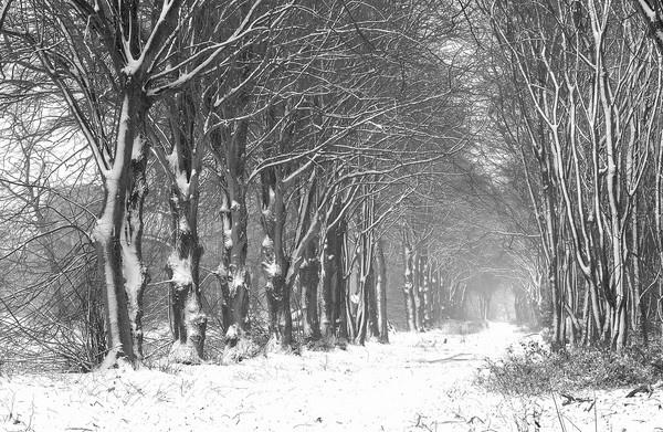 Snowy Tree Avenue by Beckyphotos