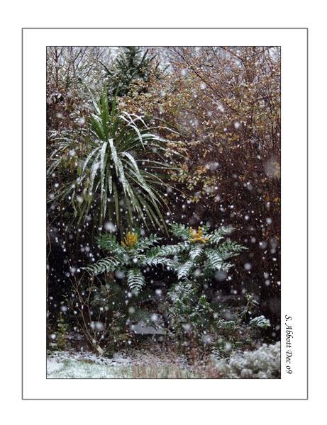 Mahonias in snow by elaronndy