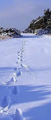 Footprints by paulmeyer