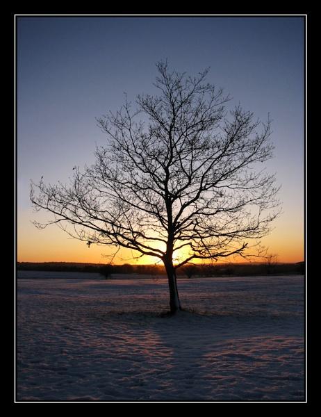 Tree by Swanvio