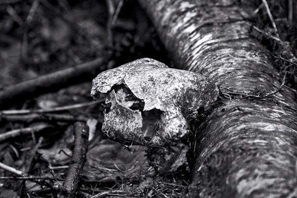 decay2 by HuntedDragon