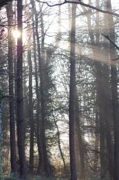 Winter Sun Shine