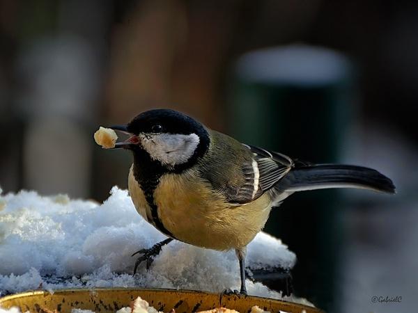 Winter is here by Gabicat