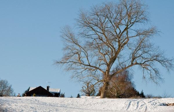 Winter Wonderland 1 by gasah
