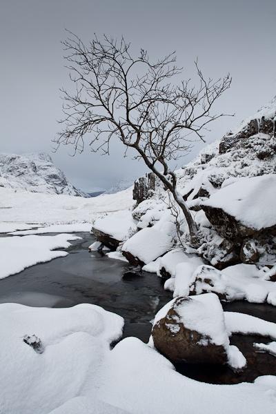 Rowan tree, Glencoe by GHGraham