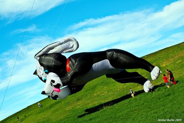 Dog Kite by ABurke
