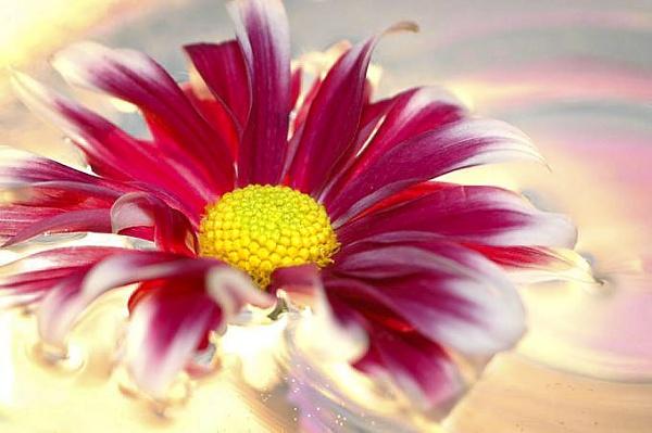 Flower by JohnBuckley