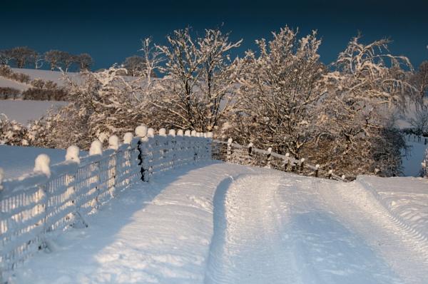 Farm lane by soggsk9