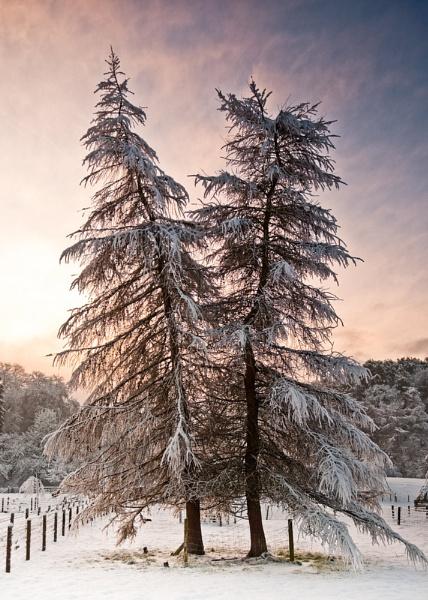 Winter Waltz by soggsk9