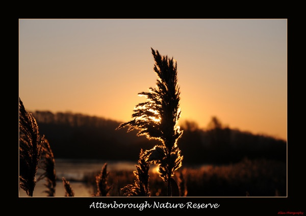 attenborough nature reserve at dawn by responce