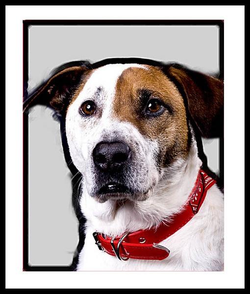 Dog Studio Portrait by Vincent_Chapman