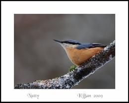 Nutty 2