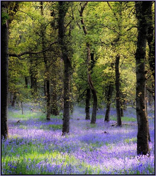 Spring.... by MalcolmM