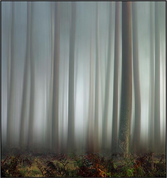 November Mists by MalcolmM