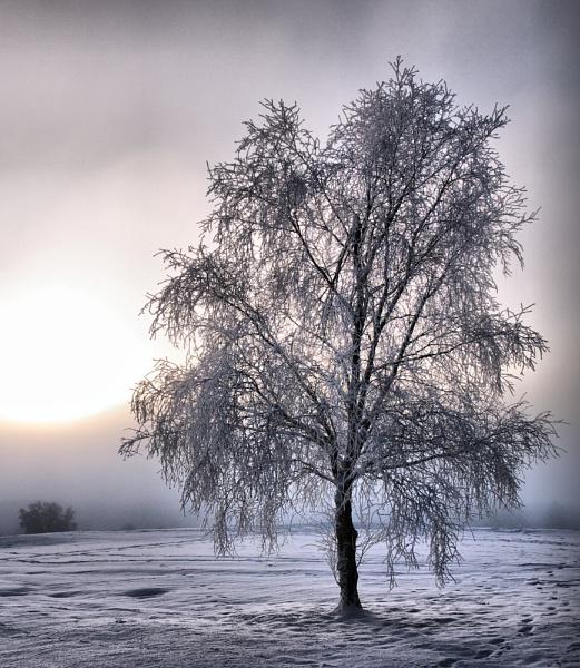Lonely Frosty Tree by bebrox