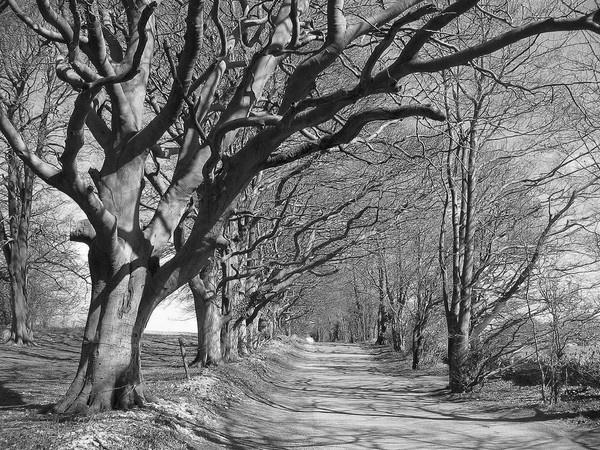 Country Roads II by Glostopcat