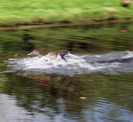 Splash Down by michaelo