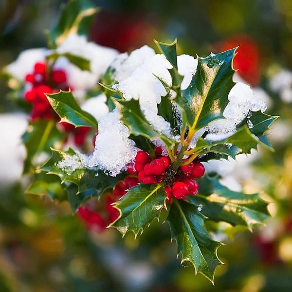 Seasonal Felicitations by GillR