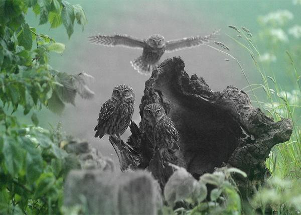 Three Little Owl\'s by jocneilson