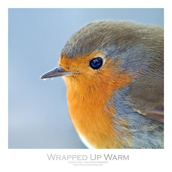 Wrapped Up Warm by WildLight