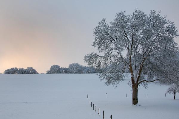 Snowy Sunrise by royalblue