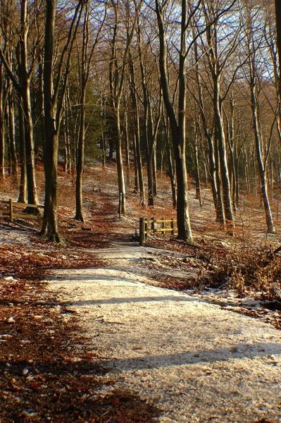 Snowy Wood by Beckyphotos