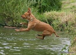 Jumping pooch!!