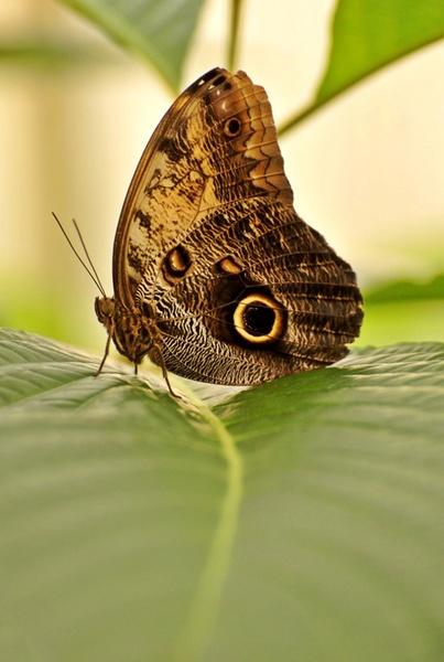 Butterfly by wavey