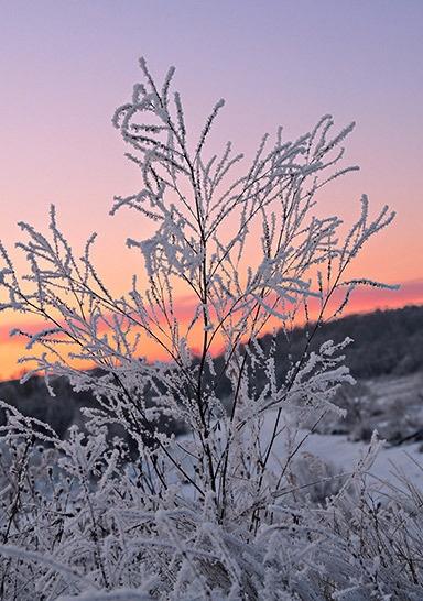 Frozen by Sergey_SG