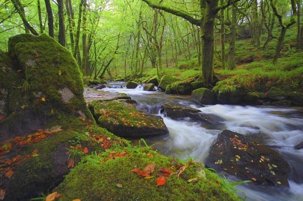 River Fowey. by Wilmot