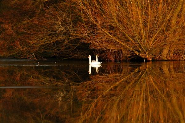 Golden lake. by Wilmot