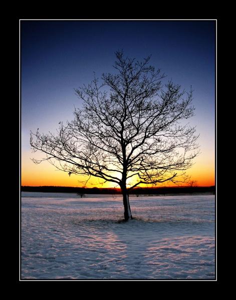 Tree 2 by Swanvio