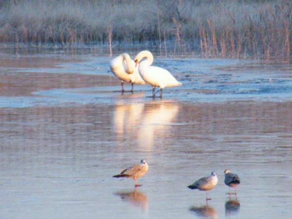 SWAN LAKE PRACTICE by fleetwoodflyers