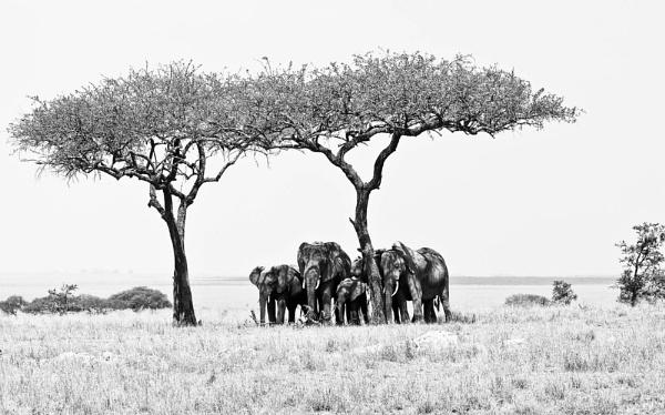 Serengeti Elephants by cmf