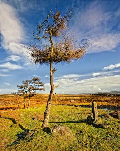 MOOR TREES by manindevon