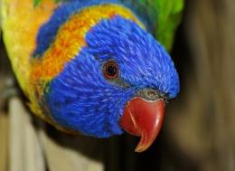 Nosey Bird