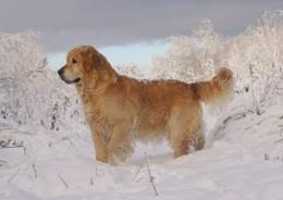 A Golden Snow Scene