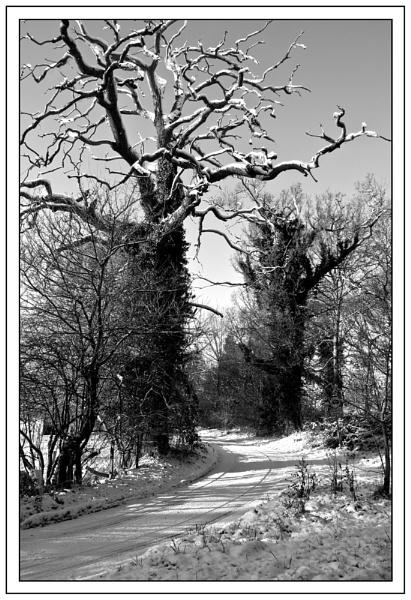 A Suffolk Lane by roseyemma