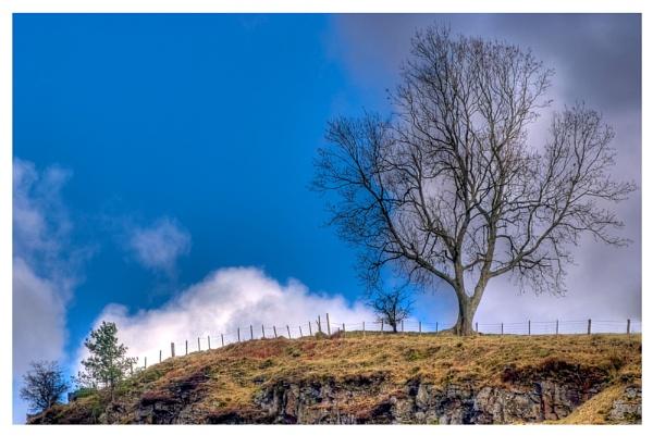 HDR Tree by kerrang