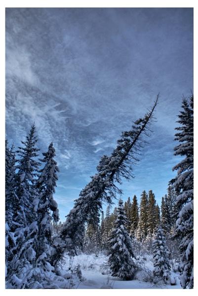 Gotta Love Winter by A_Harrison