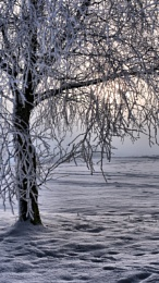 The Cold Tree
