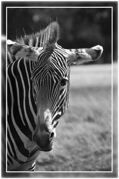 Stripey by Doglet