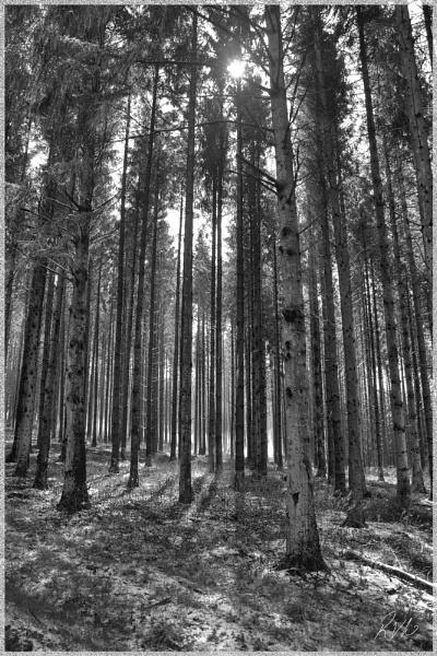 Black Wood by Doglet