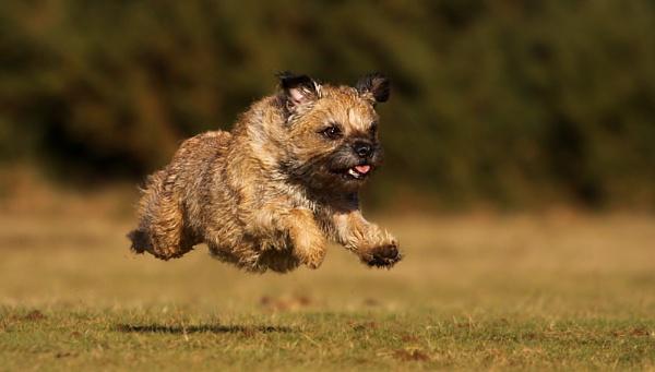 Run! by SurreyHillsMan