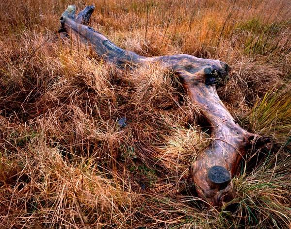 Marble log by fennera