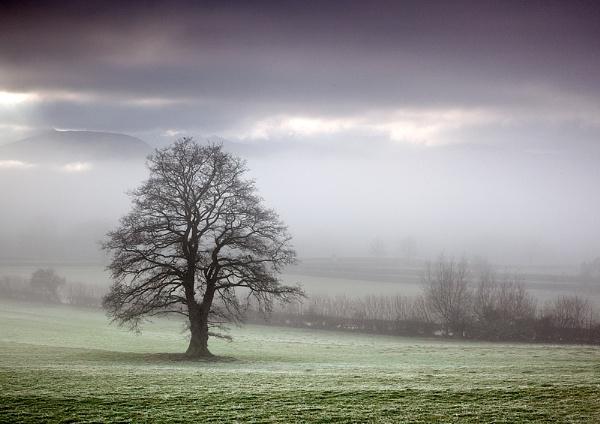 Through the mist by gary_d