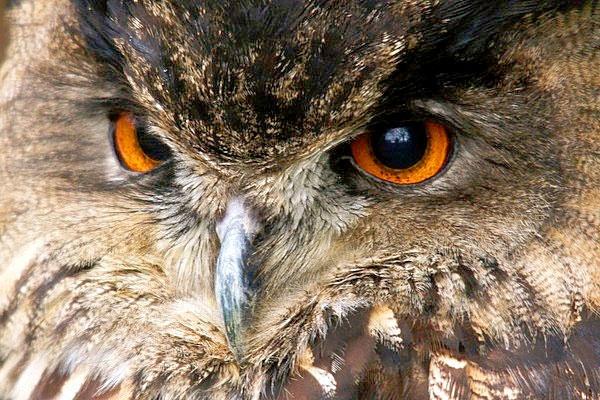 Eye see me ! by steve_eb