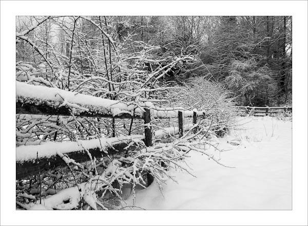 Classic Winter by jeni