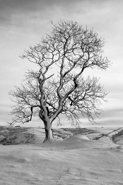 snow tree by adobedon