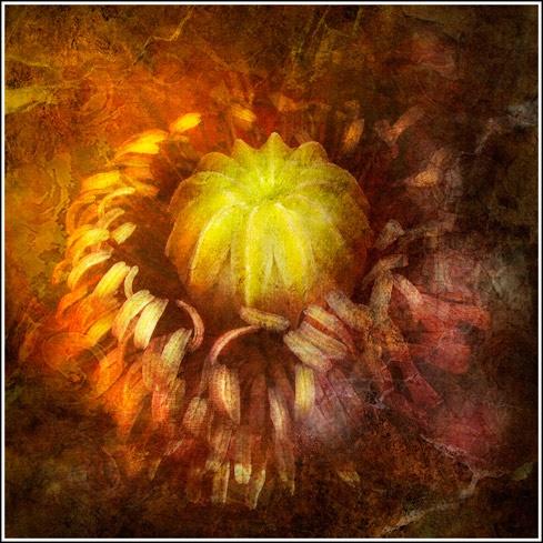 Inside a poppy by Cor